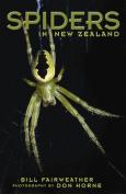Spiders in New Zealand