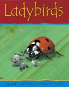 Ladybirds (Minibeasts)