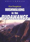 Bushwalking in the Budawangs