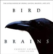 Bird Brains