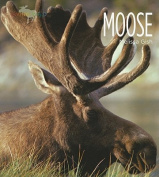 Moose (Living Wild