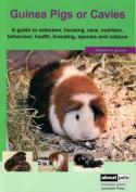 Guinea Pigs or Cavies