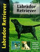Pet Love Labrador Retriever