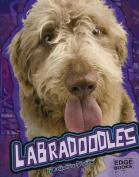 Labradoodles (Edge Books