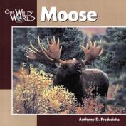 Moose -OSI (Our Wild World