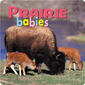 Prairie Babies [Board book]