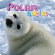 Polar Babies [Board Book]