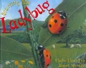 Ladybug (Starting Life)