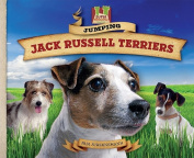 Jumping Jack Russell Terriers
