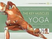 Key Muscles of Yoga