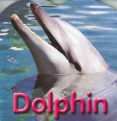 Dolphin [Board book]