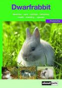 The Dwarf Rabbit