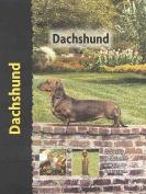 Pet Love Dachshund