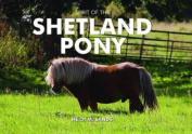 Spirit of the Shetland Pony