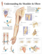 Understanding Shoulder and Elbow