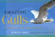 Amazing Gulls