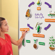 EDUCATIONAL INSIGHTS 3D Life Cycles Whiteboard Magnets