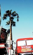 Hollywood Blvd Journal