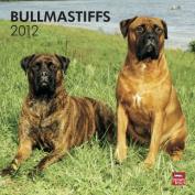 Bullmastiffs 2012 Square 12X12 Wall Calendar