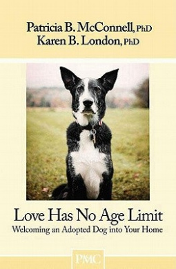 Love Has No Age Limit: Welcoming an Adopted Dog Into Your Home