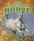 The Appaloosa Horse (Pilot Books