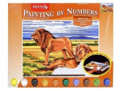 Oasis - Senior Paint By Numbers - Resting Lions