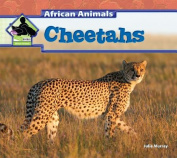 Cheetahs (Big Buddy Books