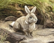 """Rabbit Cottontail H/p """"new 2011 Product"""" [Hand Puppet]"""