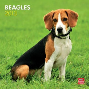 Beagles 2013 Square 12x12 Wall Calendar