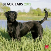 Labrador Retrievers, Black 2013 Square 12x12