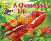 A Chameleon's Life (Science Slam