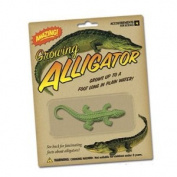 Growing Alligator