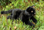Black Cat Puppet 46cm by Sunny and Co