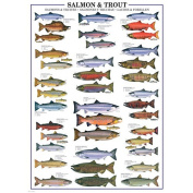 EuroGraphics Salmon and Trout 1000 Piece Jigsaw Puzzle