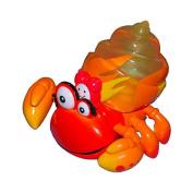 Xia-Xia Hermit Crabs - Trinidad Crab