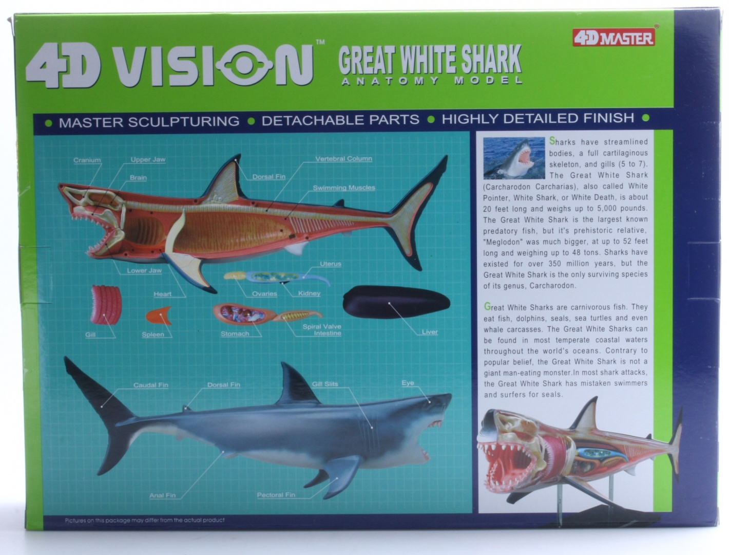 4D Vision Great White Shark Anatomy Model by USA Toys - Shop Online ...
