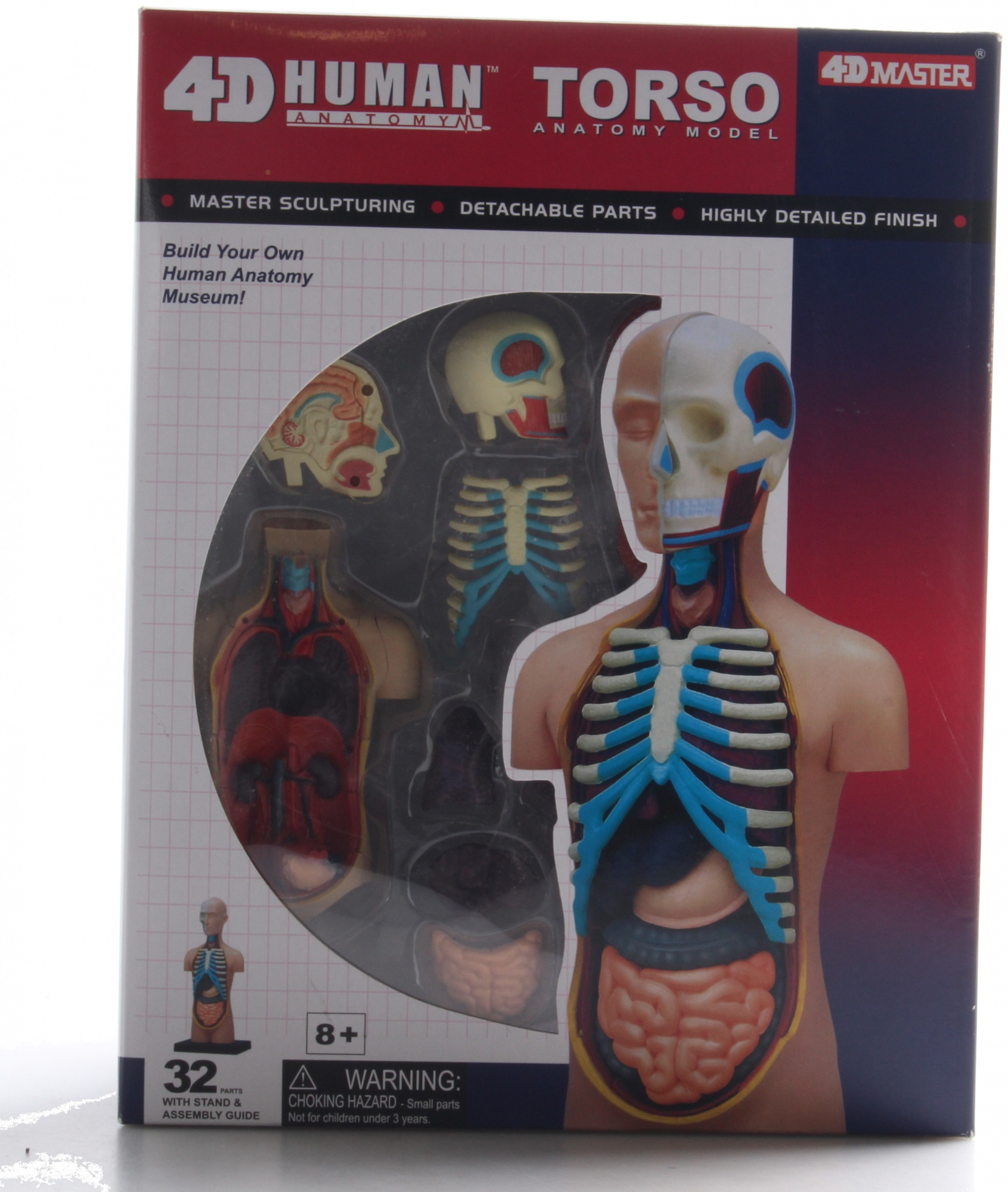 Dorable Human Anatomy Torso Model Crest - Anatomy and Physiology ...