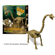 Wild Creations Dino Excavation Kit Brachiosaurus Skeleton