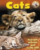 Pets Plus: Cats (Pets Plus)