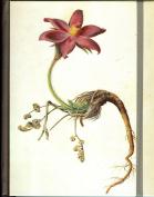 Journal : Pasque Flower