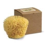 Baudelaire Wool Sponge 4.5 Sponge 13800
