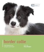 Border Collie - Dog Expert