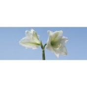 Brewster Home Fashions Ultimate Lilies Panoramic Wall Mural