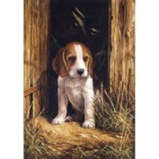 PBN Beagle Puppy Junior Small