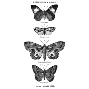 Stampers Anonymous 486967 Tim Holtz Red Rubber Stamp-Butterflies & Moths 1 6.4cm . x 13cm .