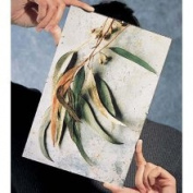 Framatic Frameless Glass Clip Picture Frame for A 20cm x 25cm Photograph, Black