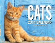 Cats 2014 Mini Box Calendar