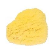 Natural Sea Bath Sponge 12.7cm  - 15.2cm