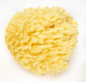 "Natural Sea Wool Bath Sponge 4-12.7cm by Spa Destinations ""Creating The In Home Spa Experience"""