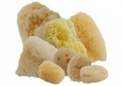 Aphrodite Sponge Value Pack #6